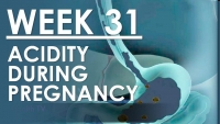 The Pregnancy - Week 31