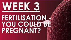 The Pregnancy Week 3 - Fertilisation - You could be pregnant...