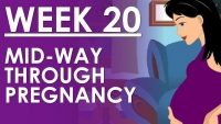 The Pregnancy - Week 20