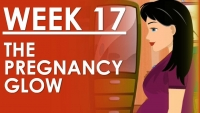 The Pregnancy - Week 17
