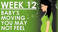 The Pregnancy - Week 12